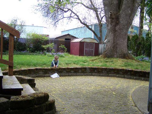 Back-yard2